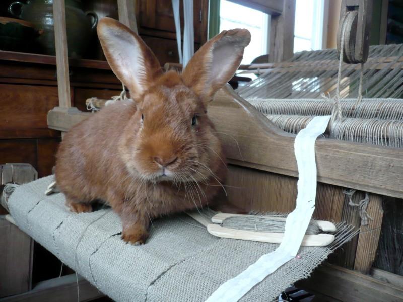 Tkacz króliczek Wielkanocny