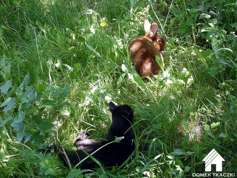 Domek Tkaczki-zwierzęta